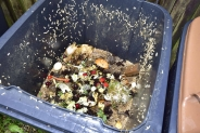 How do I get rid of maggots in my dustbin? Step By Step Guide